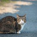 猫は生活環境によって『顔が変わる』って本当?愛猫はどんな顔つきを…
