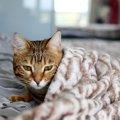 猫が『衰弱』している時の症状5つと対処法
