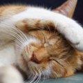 猫のふん対策に効果的な2つの方法とは