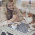 猫カフェでのマナーと触れ合う時の注意点