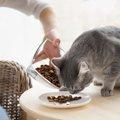 猫の自動給餌器を選ぶポイントとおすすめの商品