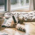猫が『お尻歩き』する4つの原因と対処法