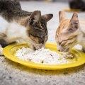 野良猫に餌付けすることの賛否と守るべき注意点