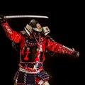 猫の甲冑(鎧)が可愛すぎる!値段や製作した経緯について
