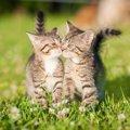 猫がキスをする意味とは