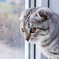 ジメジメ時期に猫用品にしたい『湿気対策』3選
