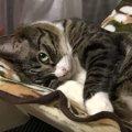 『猫を魅了する人』がしている行動3つ