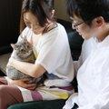 猫にガン(癌)が出来てしまうのは?考えられている原因7つ