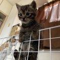 やましいことのある猫が取る行動5つ