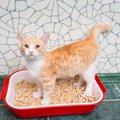 猫がうんちをしない6つの原因と対処法