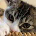 仲良し♡パパ猫の隣でリラックスする子猫
