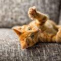 猫の爪とぎを手作りしてみよう!ダンボールで簡単作り方