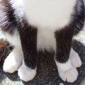 猫の座り方6種類!座り方でわかる猫の気持ちや病気とは