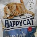 我が家のにゃんず御用達フードHAPPY CAT!安全なキャットフードの選び…