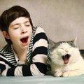 猫があくびをする「8つの理由」