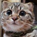 猫が人の言葉を理解してると思う瞬間2つ
