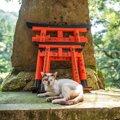 猫神神社(ねこがみじんじゃ)に行ってみよう!ルーツやアクセス方法