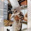 悪い猫さんへの判決!「果物ネットの刑」に処されたお姿が話題