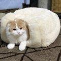 猫のためにやるべき『冬支度』3つ