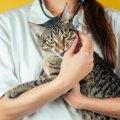 備えあれば憂いなし!「猫のための家庭の医学」の内容とは?