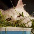 猫のグレインフリーフードとは?特徴と選び方について