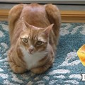 こんがり焼けたパンに見える茶トラ猫!可愛い姿に猫好きさん悶絶♡
