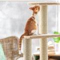 猫も運動し過ぎると筋肉痛になるの?