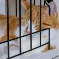 2匹一緒に入れる猫のケージ!おすすめ商品、使い方や選び方まで