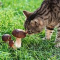 猫にきのこを与えるときに気をつけるべきこと5つ!食べると危険なも…