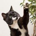 猫は観葉植物を食べる?危険な物や対策の方法