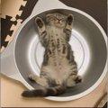 ねこ鍋で『ばんざ〜い』へそ天する子猫♡可愛すぎて悶絶必至