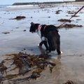【波も音も怖くないニャ】猫ちゃん、初めての海を満喫中♪