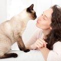 丸顔のシャム猫は希少種!?購入費用、飼育の注意点についてご紹介!