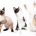 猫の生態は不思議!意外な習性から可愛い仕草の秘密まで