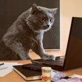 猫がいる会社5選!一緒に働くメリットとは