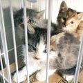 茂みに隠れ住んでいた野良猫家族を必死の保護!別々の道でも幸せを探…