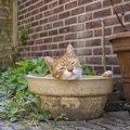 箱猫、土鍋猫、籠猫…猫が好む快適&かわいらしい小部屋を選ぼう♪