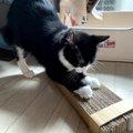 材料費0円!猫のための手作り爪とぎを作ってみた