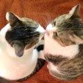 猫の『嗅覚』は意外に凄い!人間にはない特徴4つ