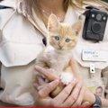 ゴミ箱から発見された子猫は、爆竹をテープで巻きつけ火をつけられて…