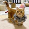 猫が飼い主を呼んでいる時の仕草や行動3つ