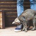 猫が喜ぶ事とは?好かれる撫で方や接し方