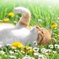 猫草ってどんな植物?猫が食べる理由や必要性について