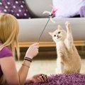 猫を快適で安全に運動をさせる方法