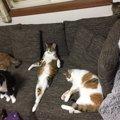 バカンス中の勝ち組?ソファで寛ぐ猫さんの大物感が凄いと話題