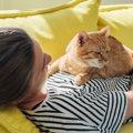 気付かないうちにやっている『猫への虐待行為』6選!良かれと思って…