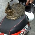 絶対に退かないにゃ!バイクのシートがお気に召した猫ちゃん