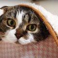 かくれんぼ?独特な隠れ方をする猫さんたちが可愛い♡