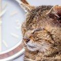 猫の『老化』が早まる生活習慣4つ