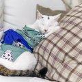 猫が着れるちゃんちゃんこ!かわいいアイテム6選